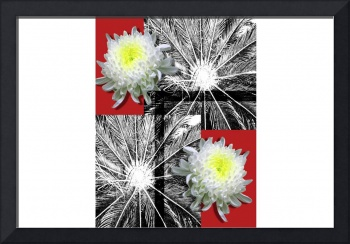 Chrysanthemums for a poster