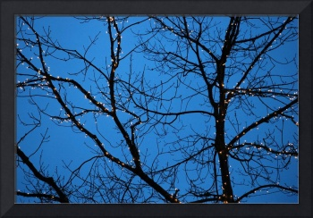 Tree Silhouette with Blue Sky
