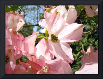 Dogwood Pink Flowering Spring Tree Art Prints