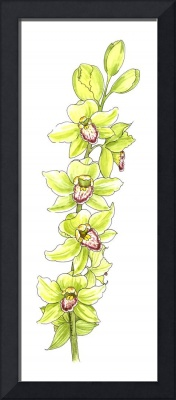 Cymbidium Blossoms