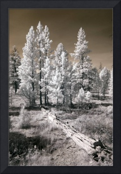 Bryce Canyon Infrared Trees