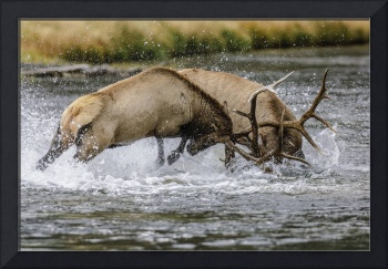 Battle of the Bull Elk