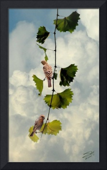 Two Finches on Vine
