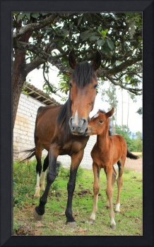 Mare and Colt on a Farm