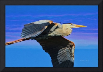 Blue Heron Series Fly