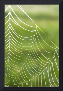 Spider web with dew drops on a green background