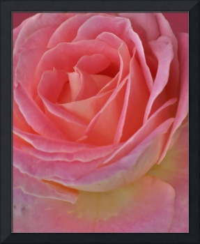 Perfume of Pink Roses