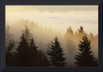 A Forest In The Valley With Fog At Sunrise, Happy