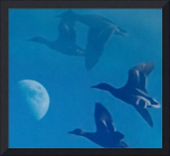 Mallards Flying with the Moon