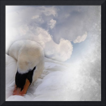 swan's dream of the sky