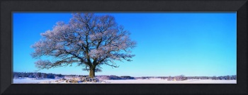 Winter Tree Field