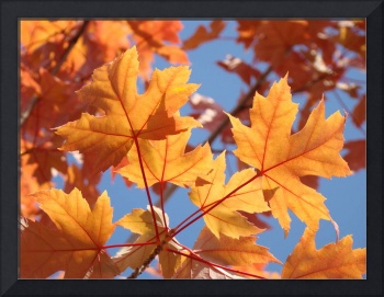 FALL ART Orange Autumn Leaves Blue Sky Baslee