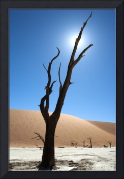 Morning Sun on Dead Vlei