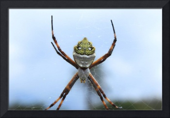 Orb Weaver Spider On a Web