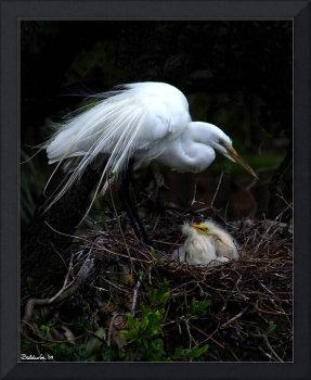 Egret With Chicks