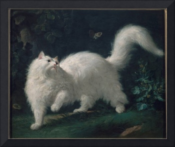 Jean-Jacques Bachelier~White Angora Cat Chasing a