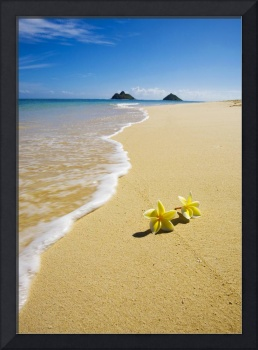 plumeria on the beach