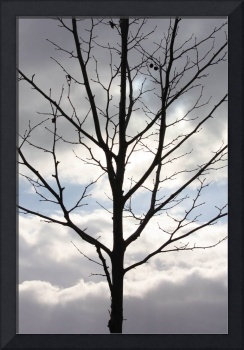 Winter Tree with Interesting Clouds