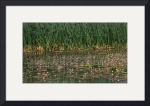 Reeds and Weeds IMG_8634 by Jacque Alameddine