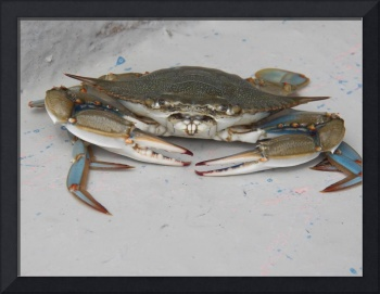 Blue Crab 2--Part of the