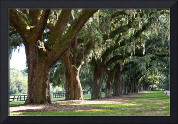 Charleston, South Carolina Plantation - 4
