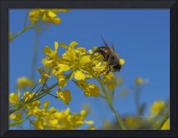 Honey Bee_4300091