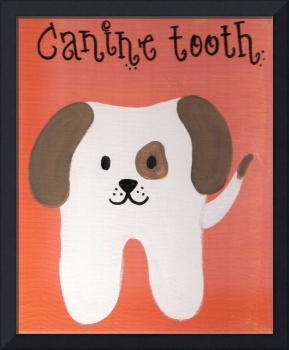 canine tooth