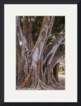 Under the Banyan Trees by John Kapusta