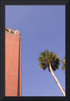 Century Tower & Palm Tree, University of Florida