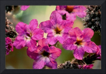 IRIDESCENT PINK FLOWERS