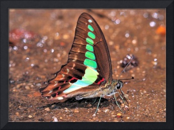 Butterfly Horizontal