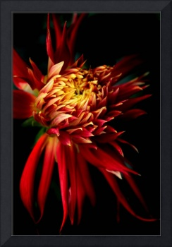 Dahlia Show and Tell