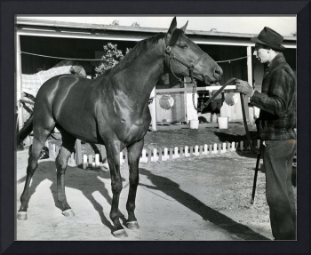 Seabiscuit Horse Racing #1