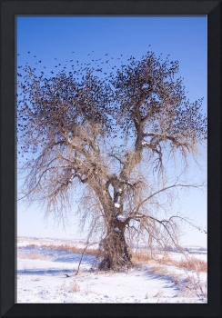 Bird Tree Leaves Fine Art Photo Print
