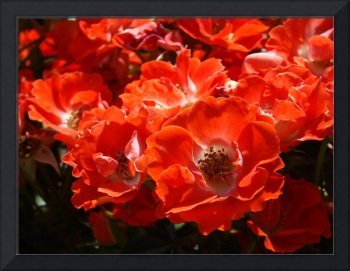 Christmas Gift Gallery RED ROSES Art Gifts Baslee