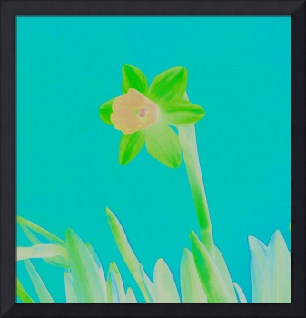 Daffodil Light Green