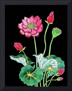 Lotus Flower Watercolor With Black Background