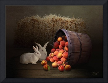 Fruit of the Rabbit