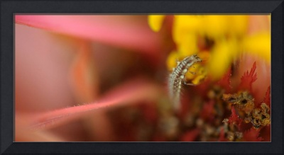 Tiny insect.