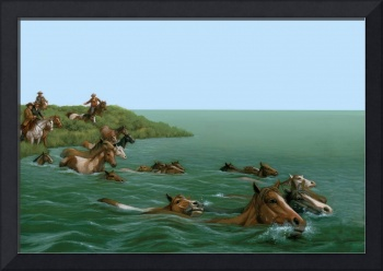 Chincoteague Horses Swim the Channel