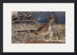 Roadrunner and Aspen IMG_2968 by Jacque Alameddine