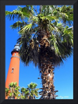 Palm By the Lighthouse