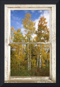Colorado Autumn Aspens Nature Window View