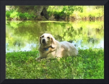 Yellow Lab by Lake