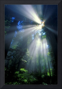 Sunlight Filtering Through Dense Forest Foliage, A