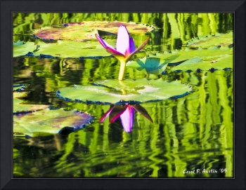 Reflections on Water Lily Pond