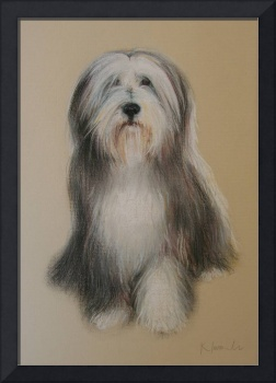 Bearded Collie pastel portrait