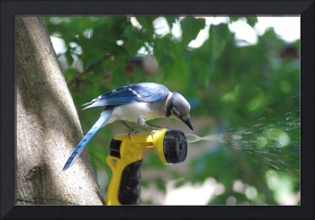 Blue Jay at his water fountain