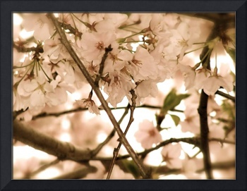 Antique Cherry Blossoms 2