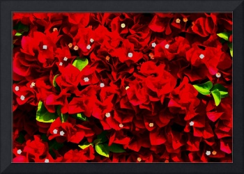 Bougainvillea Wall DigiArt